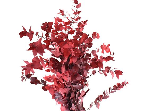 Eucalyptus Red