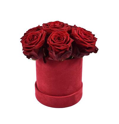 Box RED NAOMI