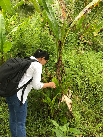 Funding for biocontrol research and field work