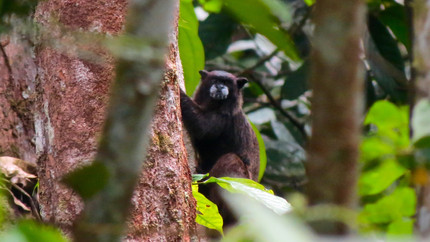 Primate diversity differs between contiguous protected and indigenous-owned lands