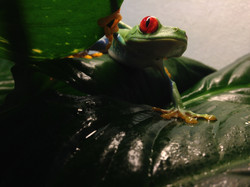 frogs - 2