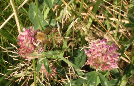 New paper out in PLOSONE: Plant genetic background influences plant-pollinator interactions