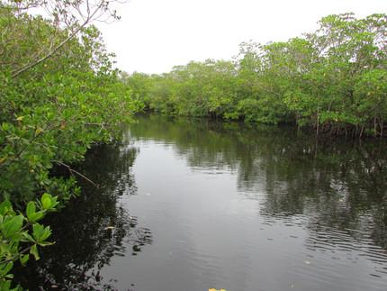 Florida mangrove roadtrip