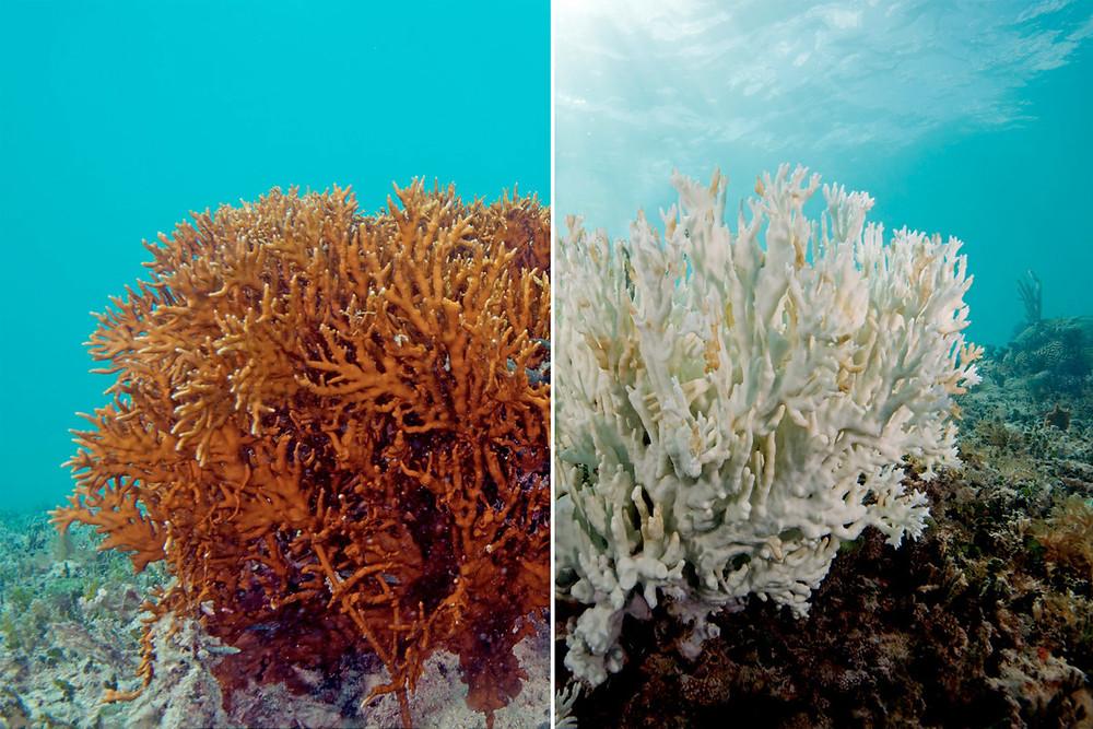 ครีมกันแดดทำลายปะการัง
