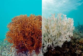 กันแดดที่คุณใช้กำลังทำลายปะการังอยู่รึเปล่า?