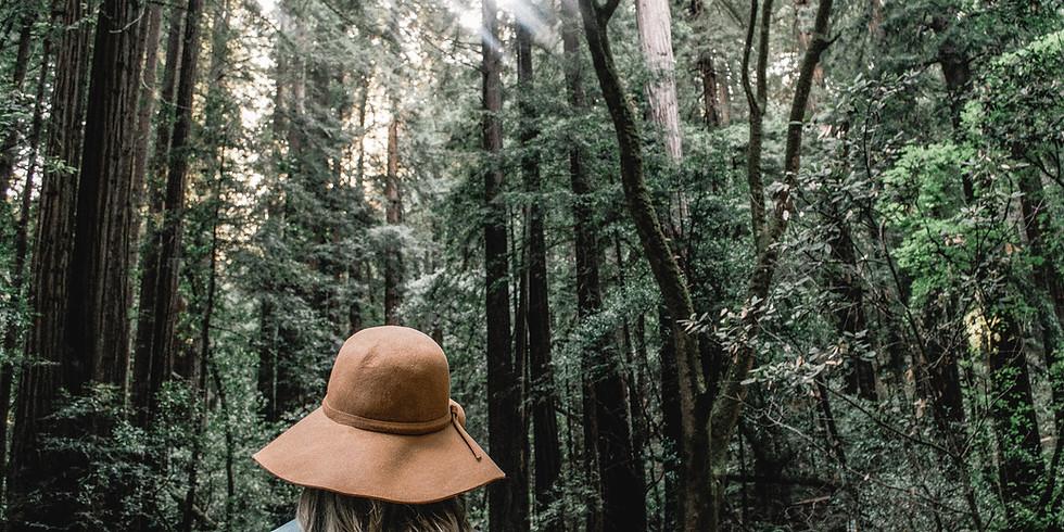 Découvrir la Forêt de Soignes et éveiller ses sens (1)