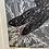 Thumbnail: Sea holly and Dragonfly