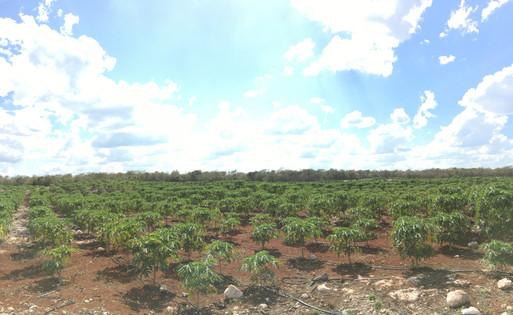 Lindo día en Yucatán