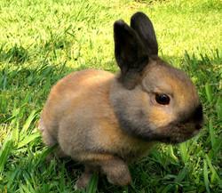 ארנבון - חוות ילדי הטבע