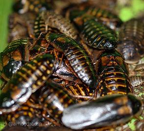 חרקי האכלה - חוות ילדי הטבע