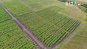Inspección_agrícola.png