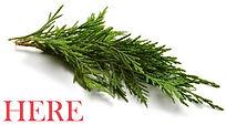 cypress-branch_HERE.jpg