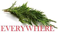 cypress-branch_EVERYWHERE.jpg
