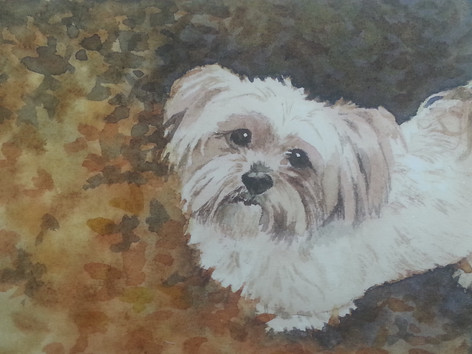 Coco (sold)