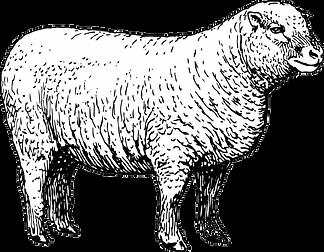 Untitled-3_0008_sheep-clipart-illustrati