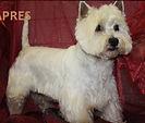 Salon de toilettage chien et chat Styl'dog Segré coupe ciseaux massages canins épilation dog sitting