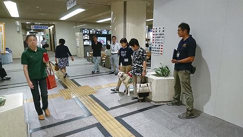 p_盲導犬訓練.jpg