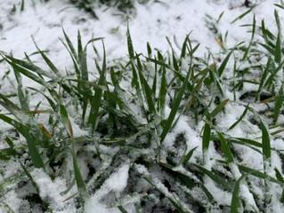 Зима без снігу тільки погіршує ситуацію з майбутнім урожаєм