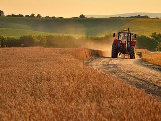 Оренда 1 гектару землі зросте до 5-6 тисяч гривень