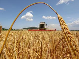 Україна знову зібрала рекордний урожай