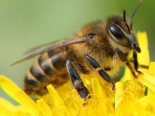 Страхування однієї бджолосім'ї обійдеться у 200 гривень