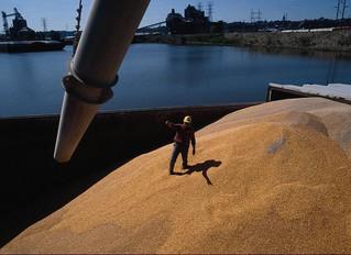 Україна продала за кордон рекордну кількість зерна