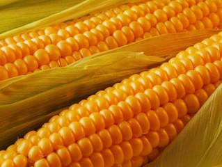 Україна експортувала 40 млн т зерна, зокрема 22 млн т кукурудзи