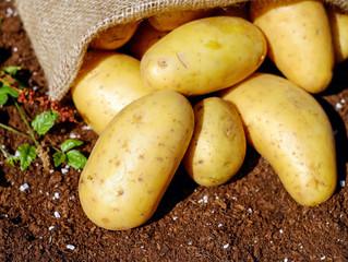 Через погодні умови зросли ціни на картоплю