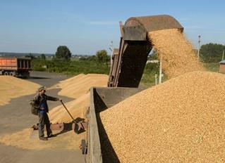 Україна вже вивезла на експорт 26 мільйонів тонн зернових