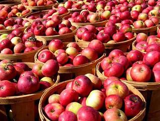 Урожай яблук буде на 15% менший
