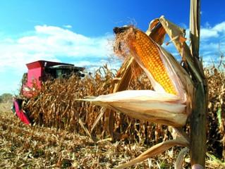 Україна збільшила експорт аграрної продукції в Європу в півтора рази