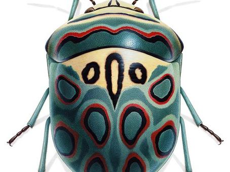 Inspiration: Picasso Bug
