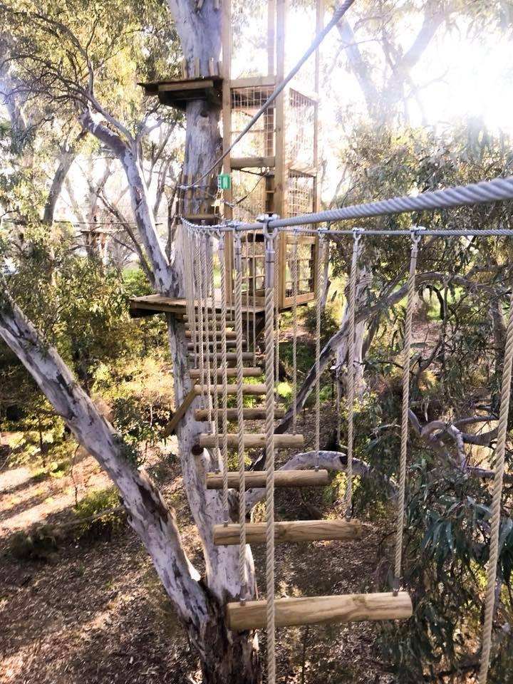 Tree Climb Adelaide
