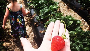 Our weekend pick for the kids - BEERENBERG FARM
