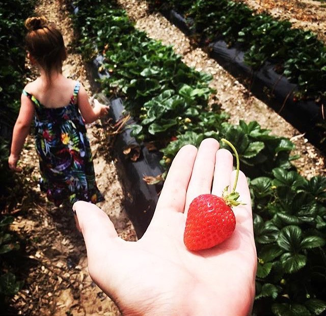 Beerenberg Strawberry Farm