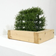A TREE IS A TREE