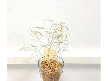 ETUDES SUR LES MONDES MEILLEURS LA VERITE AVANT-DERNIERE (A tree is a tree. Pierre/Feuille/Ciseaux) triptyque 3/3 CISEAUX
