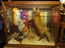 red fox pair in glass case