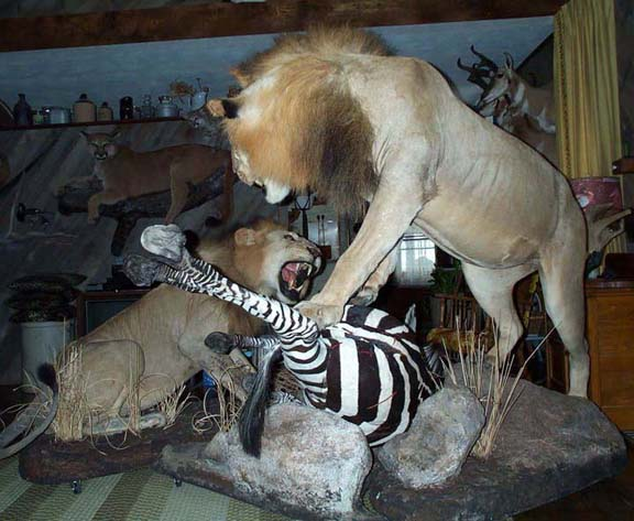African diorama 003
