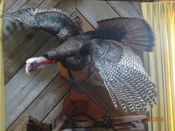 turkey flying