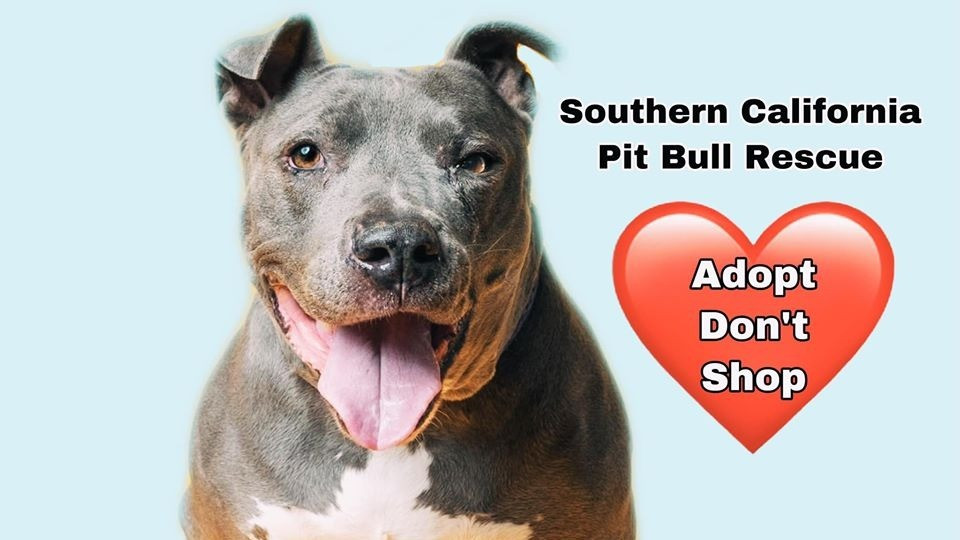 Southern California Pit Bull Rescue