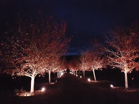 Driveway Lighting & Artistic Lighting Design | Residential azcodes.com
