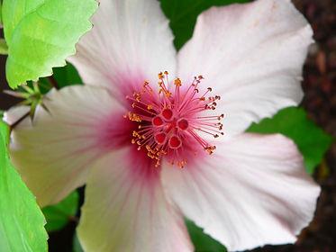 fleurs-de-bach_neobienetre.jpeg
