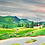 Thumbnail: Tannen und Wald