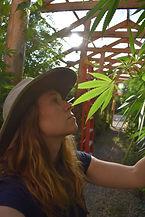 walipini greenhose