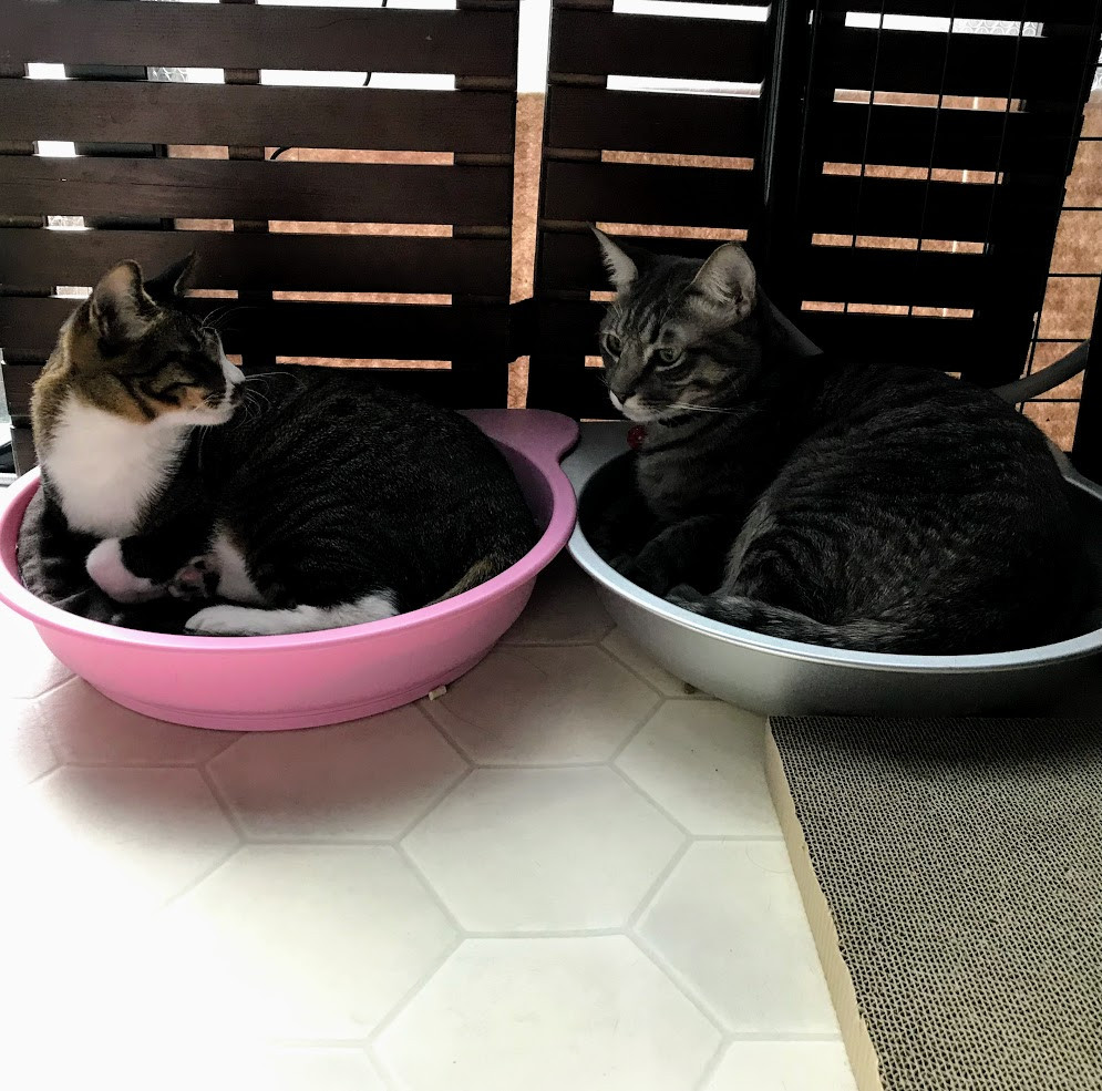 W猫鍋。なかよしかよ❤