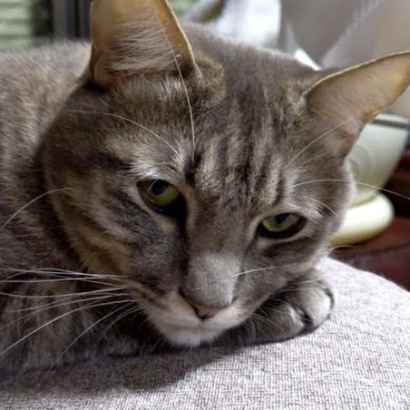 告知より猫主役