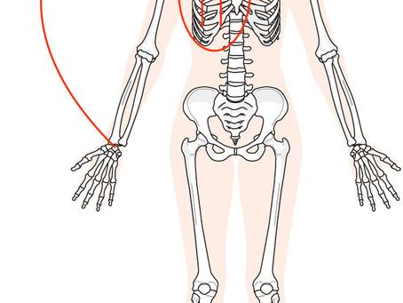 肩が痛いのは肋骨が動いていないから?奈良で根本改善を専門とする整体先生が語る肩痛改善のヒント!