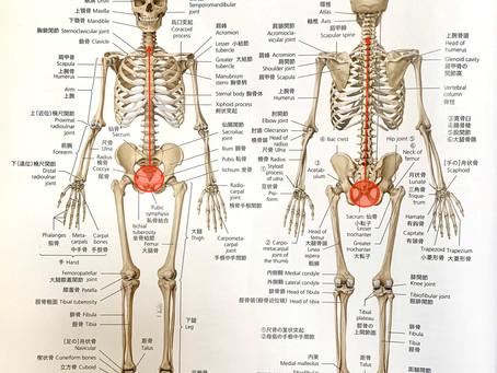 首が痛い理由は尻餅が原因だった?奈良で根本的な改善を専門とする整体先生が語る首痛改善のヒント!