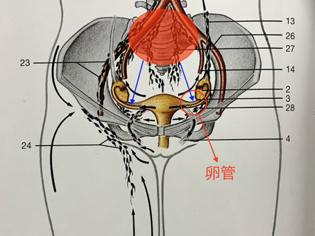 卵管摘出手術の影響でぎっくり腰?奈良で根本的な改善を専門とする整体先生が語るぎっくり腰改善のヒント!